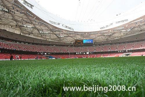 资料图片:国家体育场鸟巢美景--绿草如茵