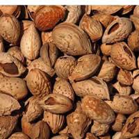 新疆喀什市特产巴旦木:营养丰富 药用价值高