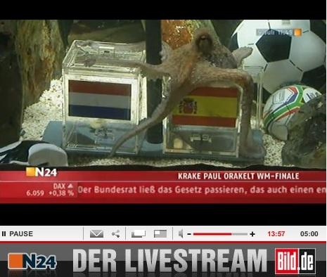 章鱼帝预测西班牙胜荷兰夺冠季军战德国胜乌拉圭