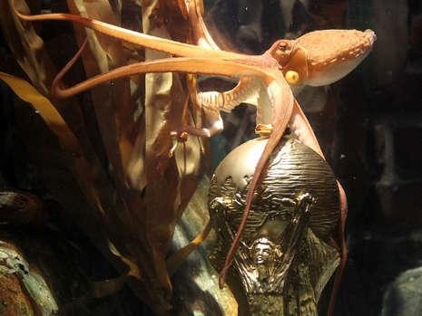 图文-大力神杯模型进驻章鱼哥水箱章鱼哥也想捧杯