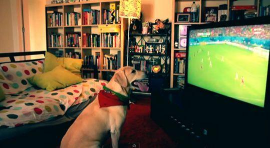 萌犬戴葡萄牙国旗看球。图片来源:台湾东森电视台网站