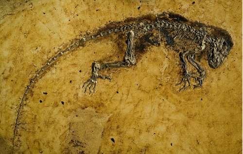 科学家发现4700万年前人与猿类共同祖先(图) - gunwww - gunwww的博客