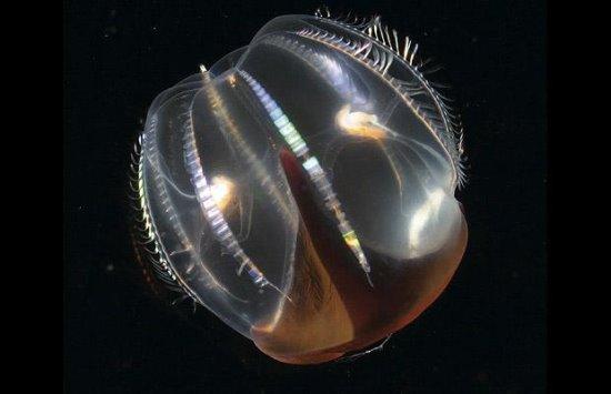 海底生物如此美丽