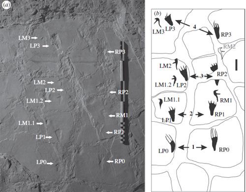 法国发现亿年前翼龙降落地面脚印化石