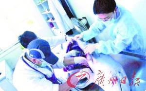 科研人员对白海豚进行解剖研究。