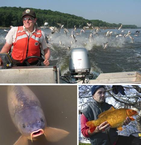 十大臭名昭著入侵物种:亚洲鲤鱼泛滥美国人束手无策