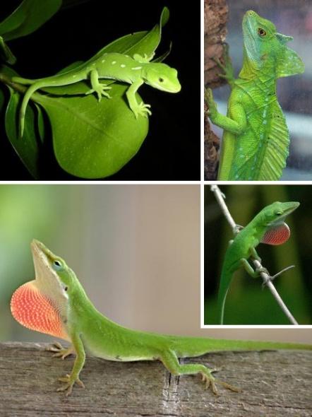 最绿的绿_微信上线绿帽子表情包 堪称史上最绿的表情包