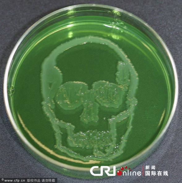 """大肠杆菌培养皿中的细菌能够""""幻化""""成骷髅形状"""