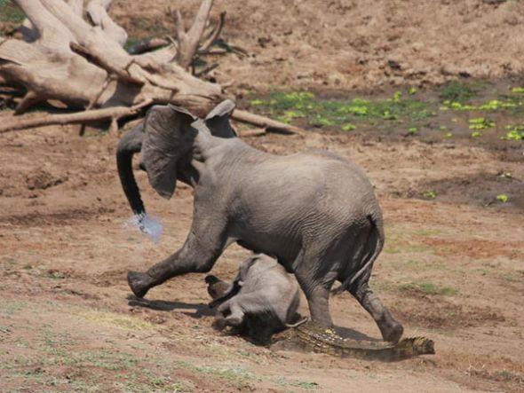 大象逃走(图片来源:Martin Nyfeler)