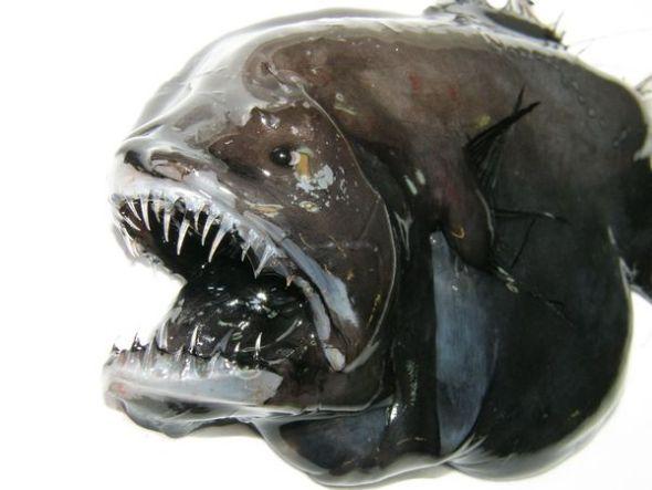 格陵兰岛附近奇异物种