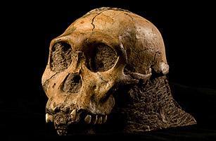 南非发现新类人物种
