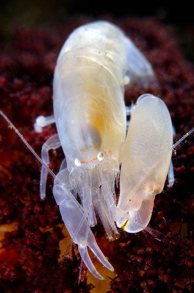 小虾的独特技艺