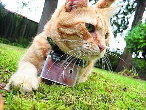 第七名:挂着相机很文艺范儿的猫Cooper,Facebook的粉丝也超过7万。