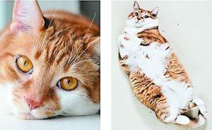 第十名:这只眼熟得很吧?Toby,在Twitter上也很热门的猫,在各种网站上几乎都能见到它的身影。