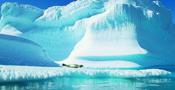 全球变暖致北极海冰减少