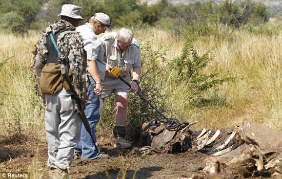 屠杀:自然资源保护主义者和警察本月初在南非调查非法狩猎犀牛的场景,一名匹兰斯堡国家公园反偷猎护林军士兵站在他们身边护卫。在这个国家,这种动物的角需求很大,致使一天有两头犀牛遭非法猎杀。犀牛角比等重量的黄金还要贵。