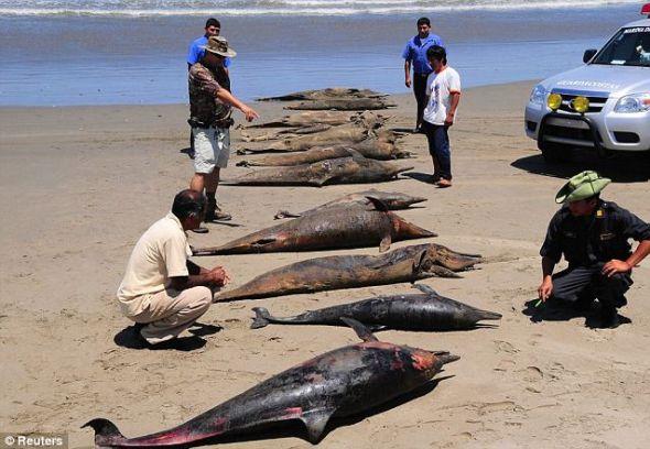 2012年初,人们在同一片海滩发现大约600具海豚尸体,死亡原因仍在调查之中