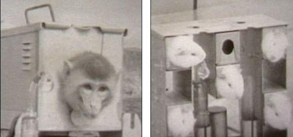 惨无人道:这只猕猴和5只老鼠正静静等待着它们悲惨的命运