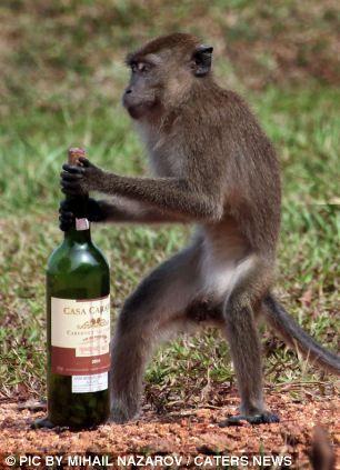 这只猴子正在努力的拔出软木塞