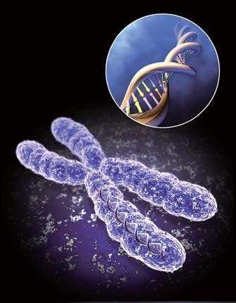 特殊基因可预测人类死亡时刻(新浪科技配图)