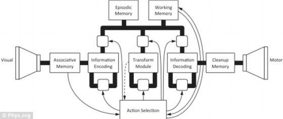 简图展示Spaun的处理信息的过程