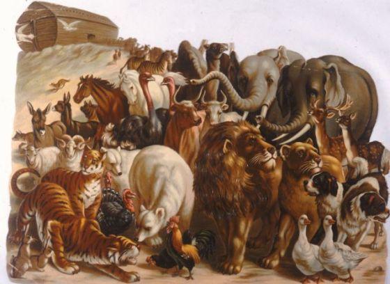 动物们登上诺亚方舟