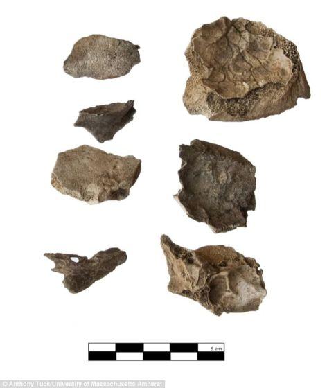 考古学家发现的死婴头骨碎片,混杂在牲畜残骸和其他碎片之中