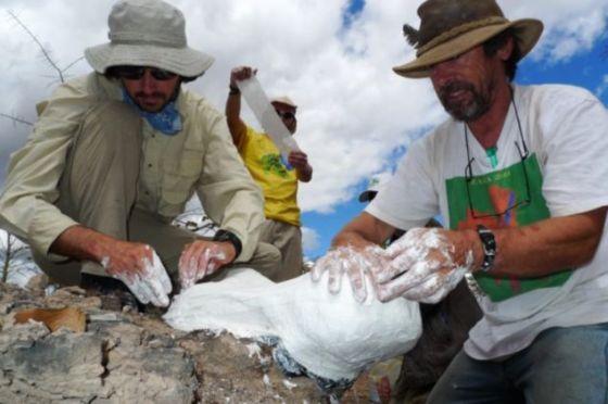 美国菲尔德自然历史博物馆的Ken Angielczyk和Iziko南非博物馆的Roger Smith正在为一个二齿兽头骨化石铸模。该化石发现于赞比亚,年代为二叠纪晚期。