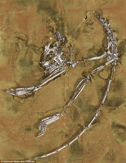 """科学家在中国长江流域发现的世界上最古老的灵长类动物化石,距今5500万年。这种灵长类动物被命名为""""阿喀琉斯基猴"""",体型不及当前世界上最小的灵长类动物侏儒鼠狐猴。它的体重不到1盎司(约合28克),是人类进化过程中重要的缺失一环"""