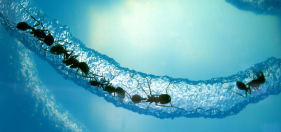 通过简单的信息交换,蚁群成功应对不断变化的外部世界的挑战。它们采用的网络体系可以非常迅速方便的修复,并且可以随时扩大或缩减规模