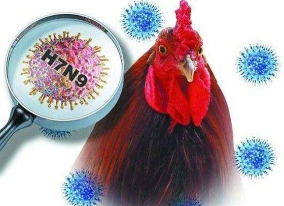 禽流感病毒研究获突破