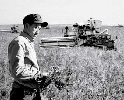 黑龙江省国营九三机械农场的农业技术员在豆田里研究新收割的大豆(摄于1952 年)。