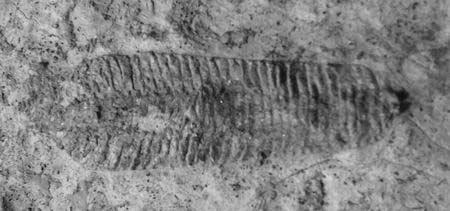 河南林州发现2亿年前古生物化石(图)