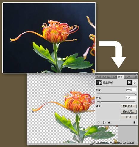 应用Photoshop CS4新蒙版加速抠图过程