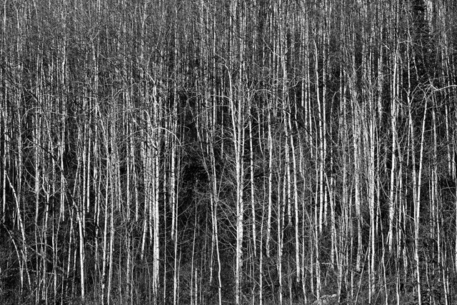 单调也精彩 唯美黑白风光摄影作品欣赏