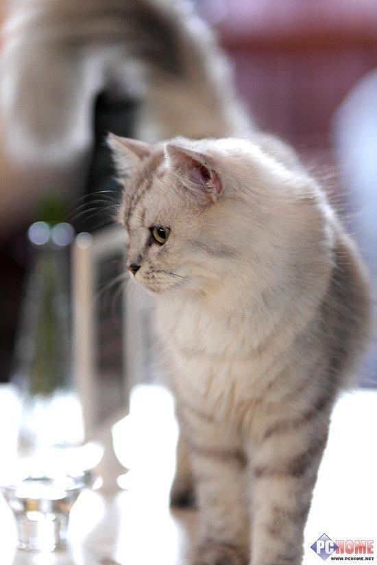 小猫可爱图片真实