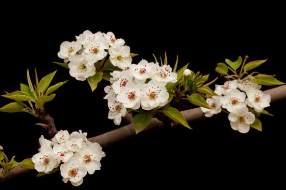 数码单反摄影宝典花卉拍摄的技巧指南
