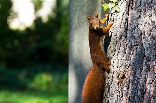 动物是人类的朋友,无论是美是丑都是大自然食物链中的一环.
