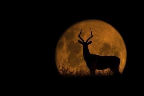 夜晚暮色降临,感受夜晚的宁静,此时的动物们都在干嘛,搜集了这组