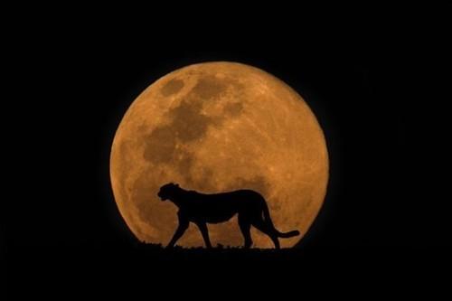 夜晚草原上的动物们 充满故事感的摄影