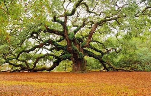 世界各地最美丽的树 高清风景摄影图赏