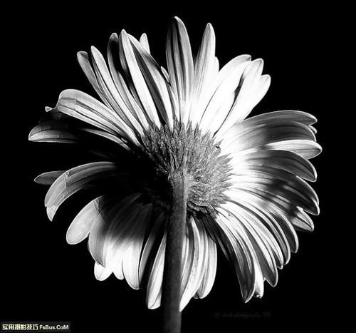 如何拍摄优秀的黑白作品