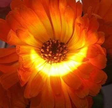 科技时代_图文:2006年约旦首都安曼日全食映照在花上