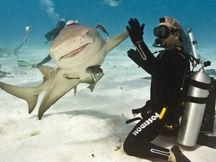 潜水员与食人鲨鱼水下嬉耍