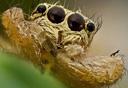 微距特写展示昆虫细节