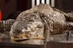 动物尸检:揭示世界最大动物内部秘密