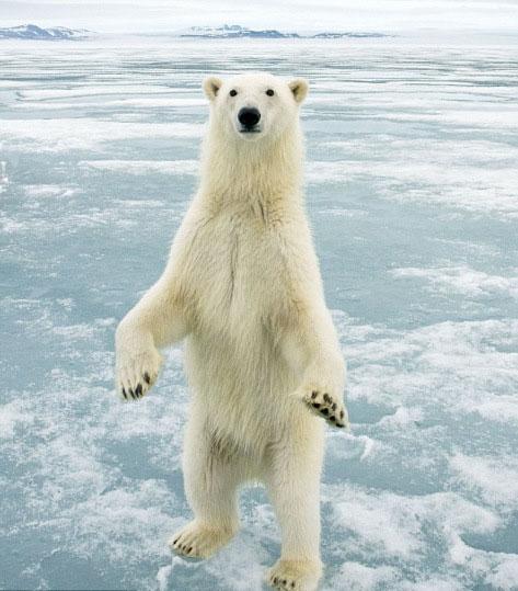 美摄影师挪威拍到北极熊站立蜘蛛asp.net判断是不是照片图片