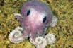 深海新物种