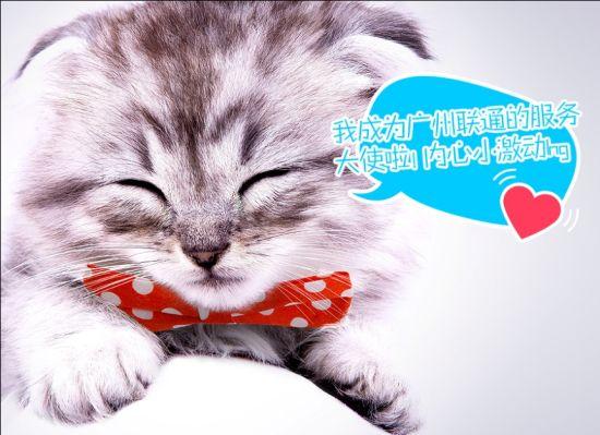 可爱猫咪翻滚头像
