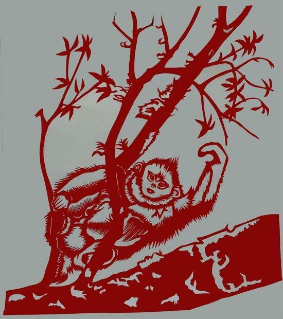 当胡老师得知滇金丝猴保护主题月活动在北京动物园
